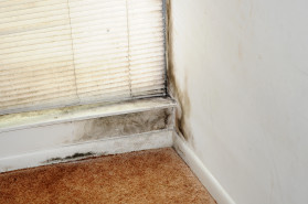 mold removal and mold inspections